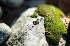 moss on rock in Yosemite, CA