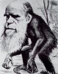 Darwin's head on body of chimp from Hornet magazine 1871