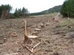 Harvested_trees_courtesy_Alan_Stewart_cc_license